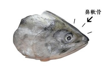 天然鮭の鼻軟骨