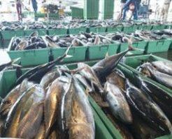 DHA・EPA青魚