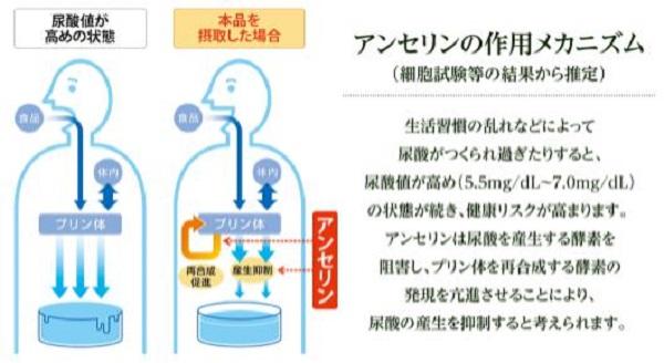 大正製薬「尿酸値が高めの方のタブレット」アンセリンの作用メカニズム
